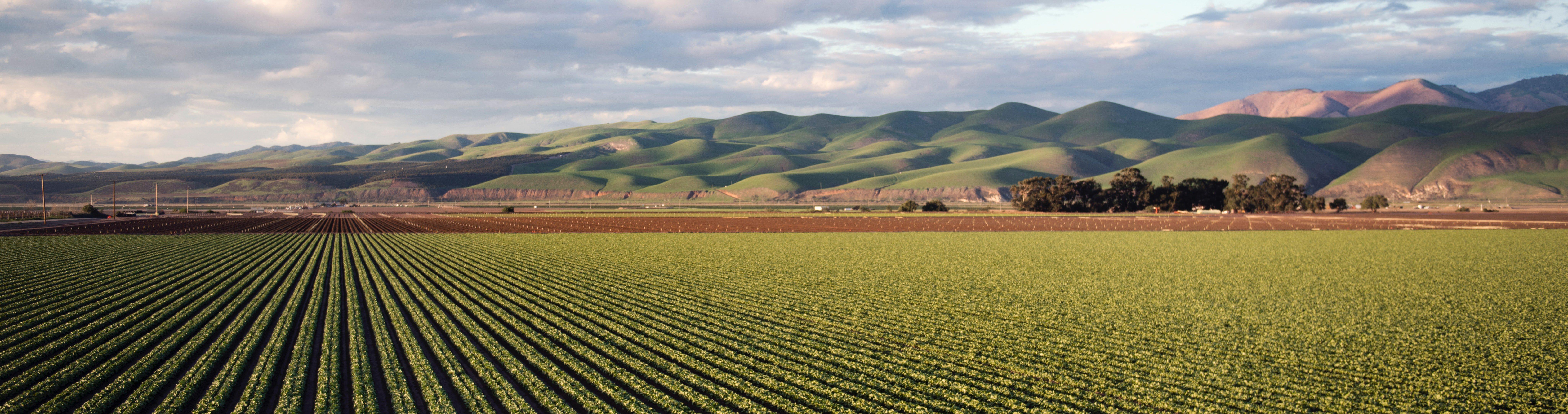 New agribusiness units