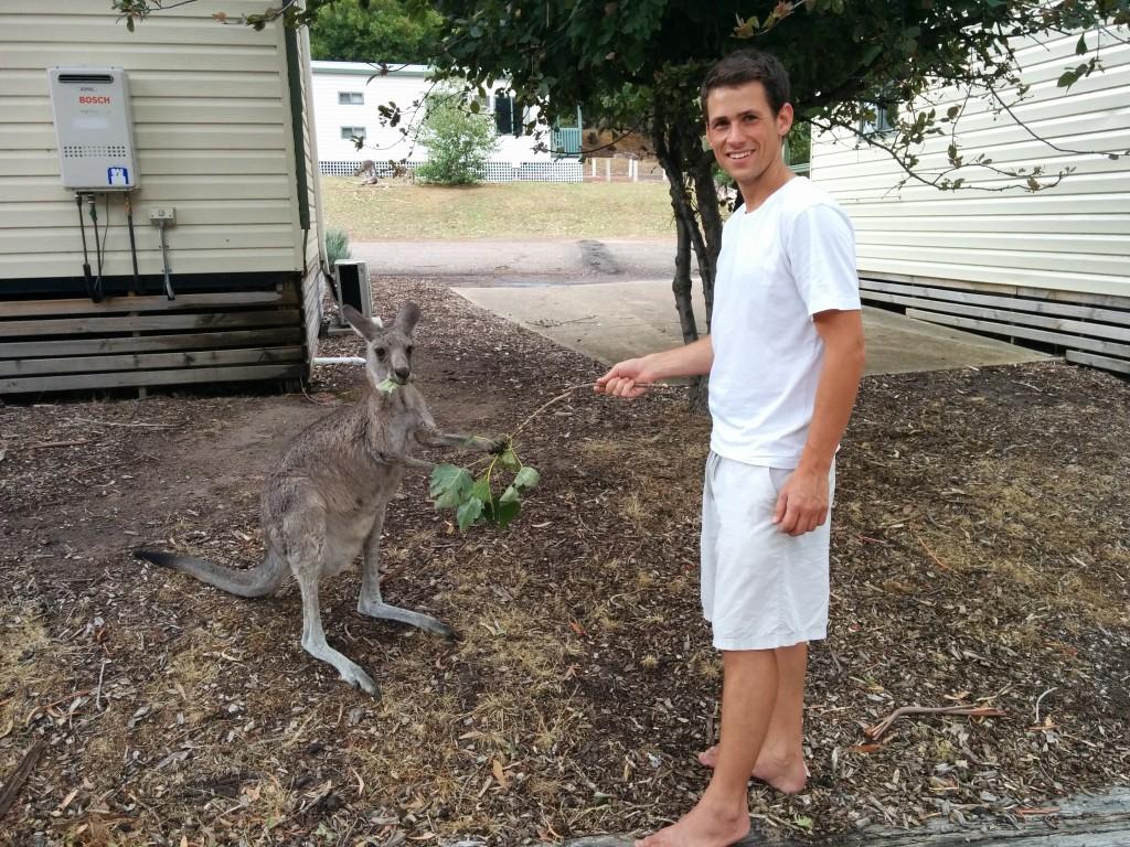 Andreas feeding a kangaroo