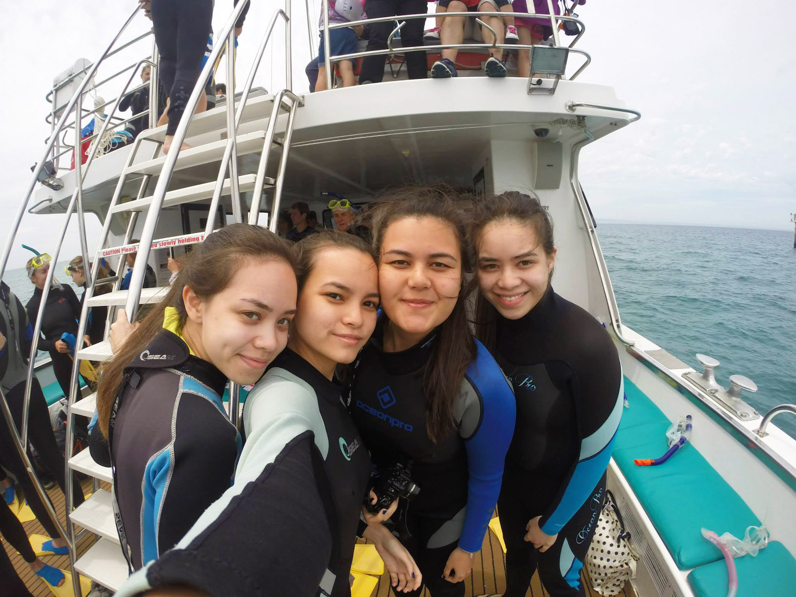 Swimming with dolphins and seals in Sorrento with family
