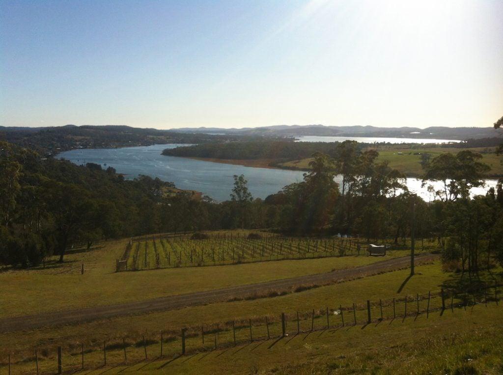 Vineyards along the Tamar River, just outside Launceston, Tasmania