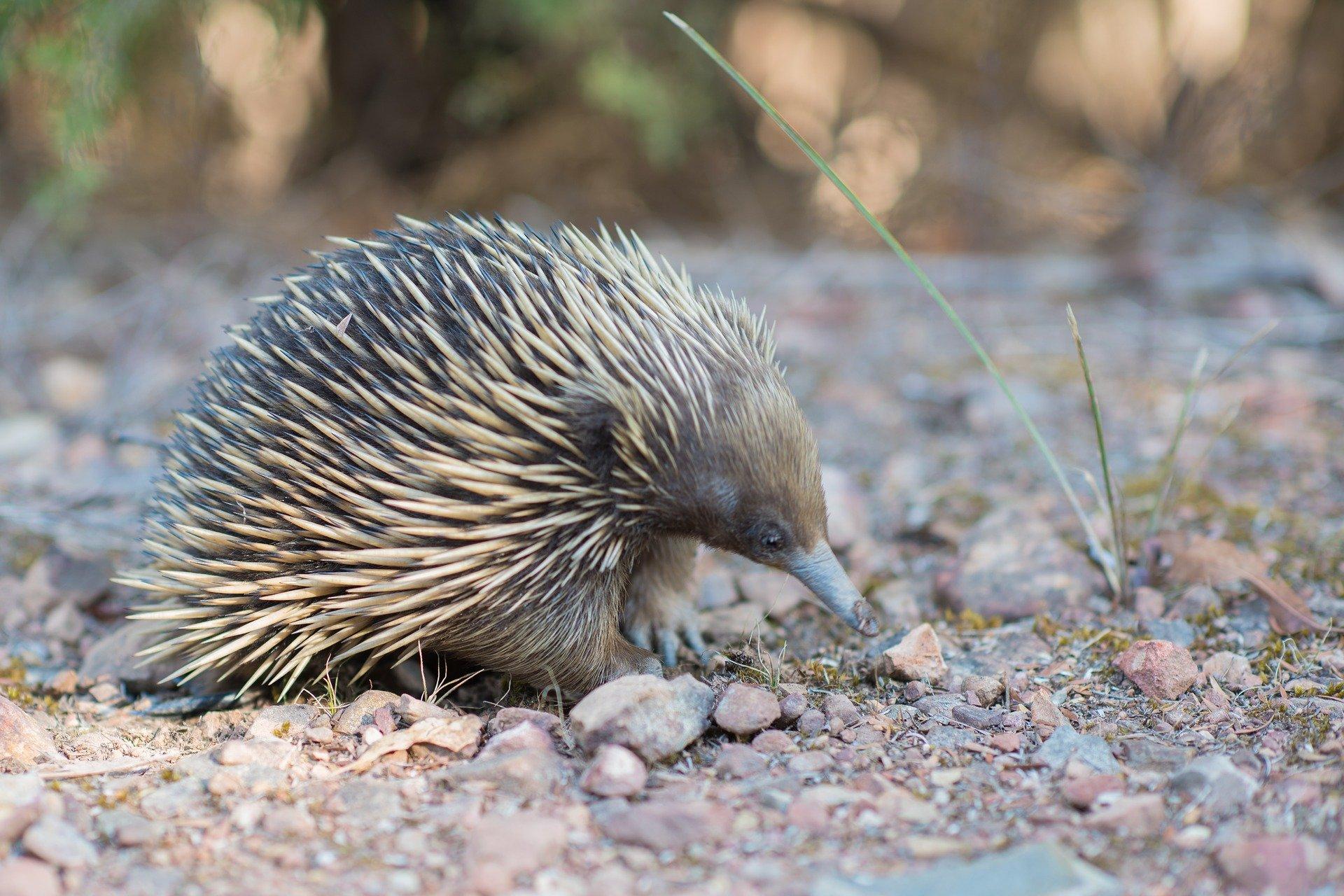 Weird Animals Of Australia 10